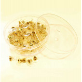 100x goldfarbene Ohrstopper 11x6mm in Box für Ohrstecker - Schmuckzubehör Ohrringe